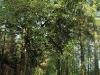 Im Hochholzer Wald